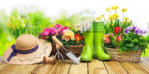 Pflanzenversand gartenversand pflanzen shop baldur for Baldur garten erfahrung