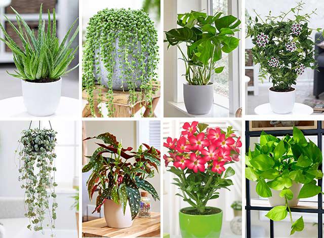 garten kataloge kostenlos bestellen, pflanzenwelt bei baldur – online kaufen & bestellen, Design ideen